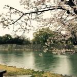 Cherry blossom spots in Hiroshima