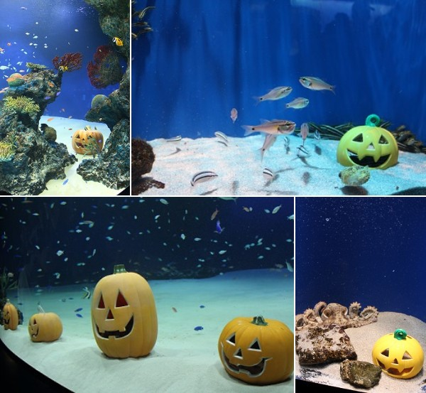 the decorations must be bothering fishu2026 but i was happy that the staff at the aquarium entertain the visitors like this