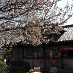 桜花亭でお祝いランチ