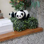 パンダ旅立ちの日