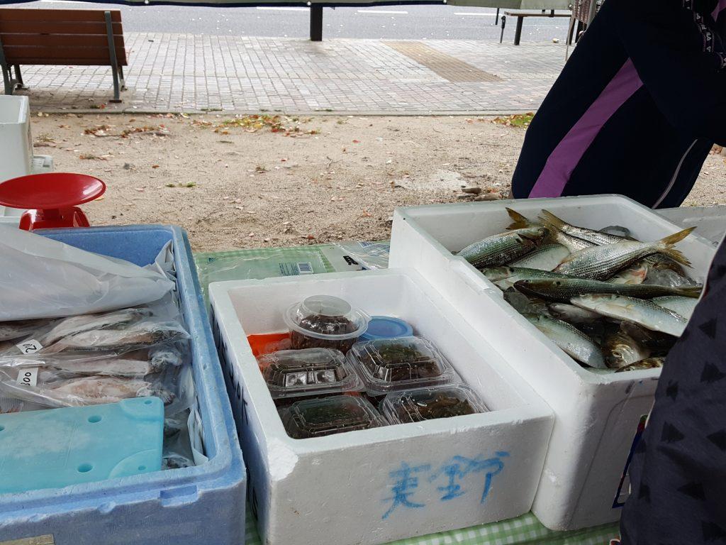 画像No4 新鮮な鮮魚