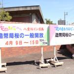 造幣局広島支局の桜鑑賞