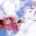 お花見パーリー/Spring BBQ 2020